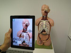 Виртуальная реальность и анатомия